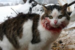 Кошка Муська зимой