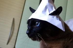 На снимке — молодой кот Невилл в строительной шапочке