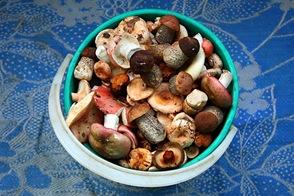 Ведёрко свежих грибов