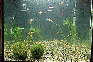 Местная вентиляция воздуха в аквариумах необходима для нормальной жизни рыб