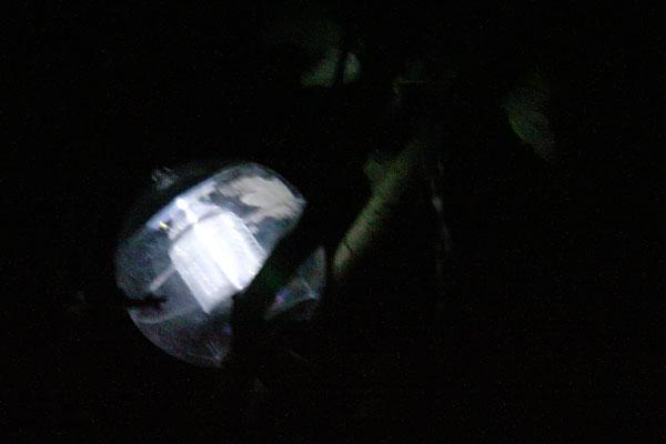 Шарик ночью