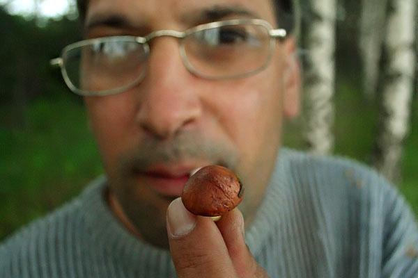 Съедобный гриб масленок