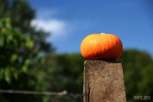 Прекрасный урожай на плодородной почве можно вырастить!