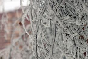 После ледяного дождя 26-12-2010.