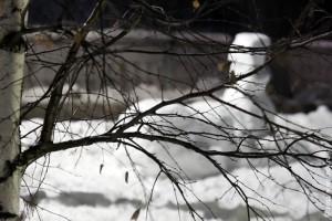 Русский снежный сфинкс.