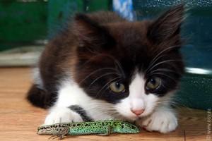 Мама-кошка принесла котёнку ящерицу.
