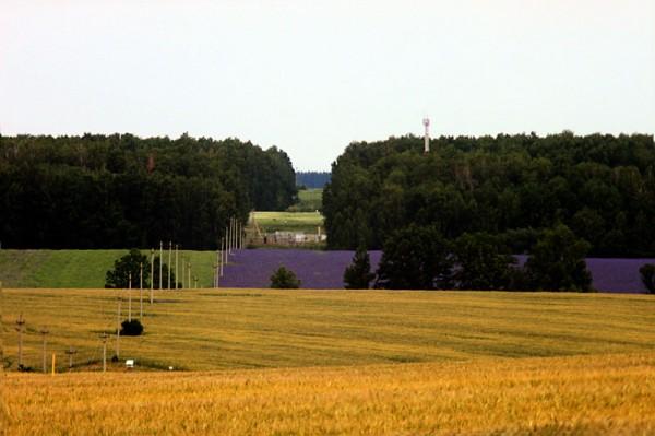 Фиолетовое поле.