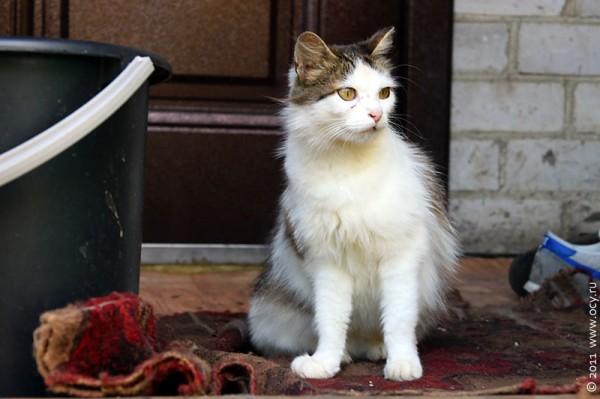 Кошка по имени Муся.