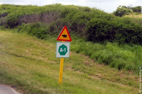 Знак Осторожно, животные на дороге.