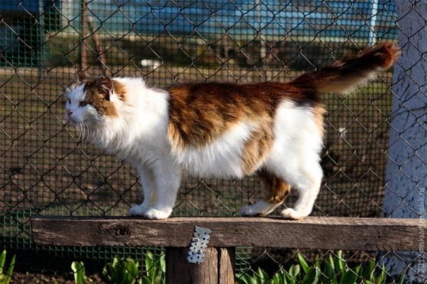 Квадратная кошка Муся.