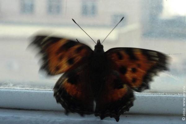 Творческий подход. Бабочка на стекле. 2012 год.