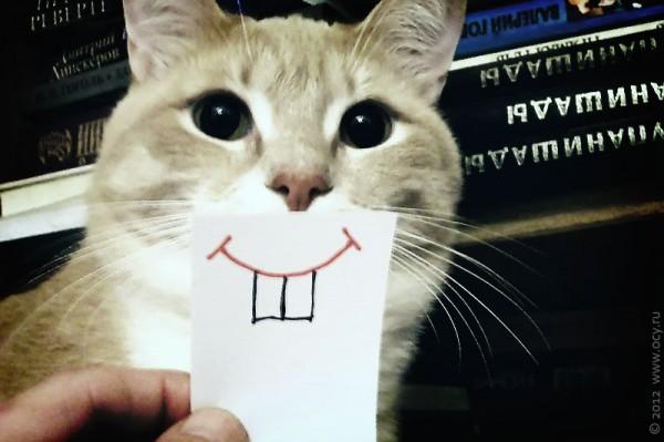 Кот Мишка с фальшивыми зубами.