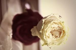 Сушёные розы.