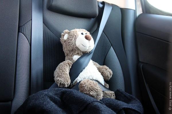 Сидящий медведь в автомобиле за ремнём безопасности.