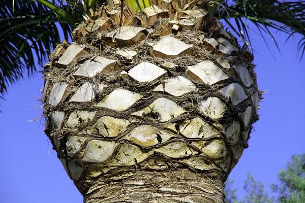 Пальмы акваполиса.