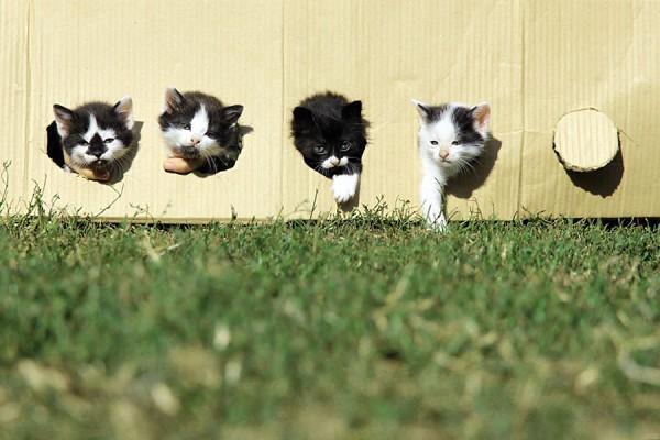 cats-badminton