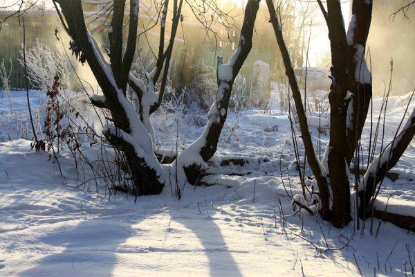 Зима на теплотрассе.